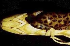 Birch - Frog - Low G